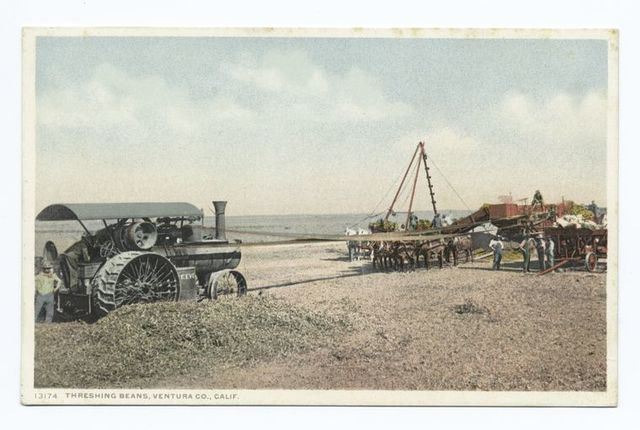 Threshing Beans, Ventura Co., Calif.