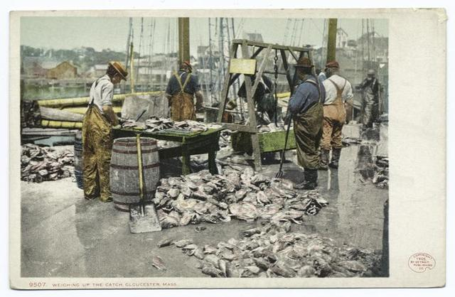 Weighing up the Catch, Gloucester, Mass.