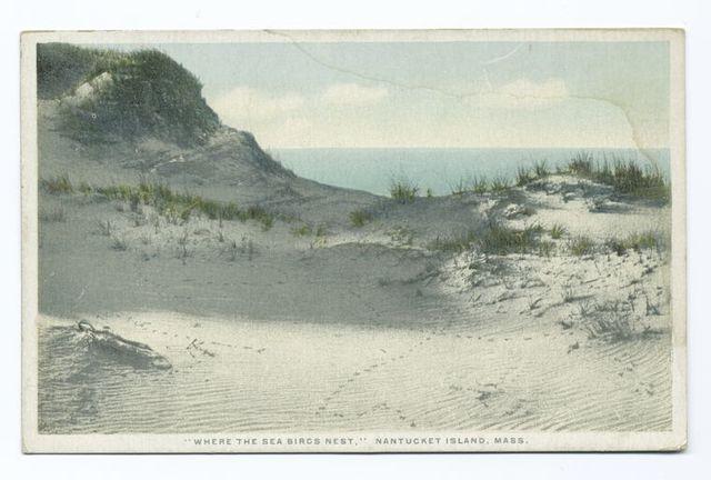 Where the Sea Birds Nest, Nantucket Island, Mass.