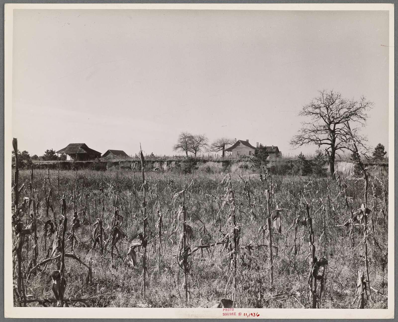 Bert Thompson's farm, Wayne County, North Carolina.