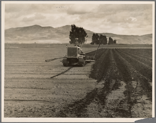 Sugar beet field showing tractor with plowshare attached and Mexican operator. California.