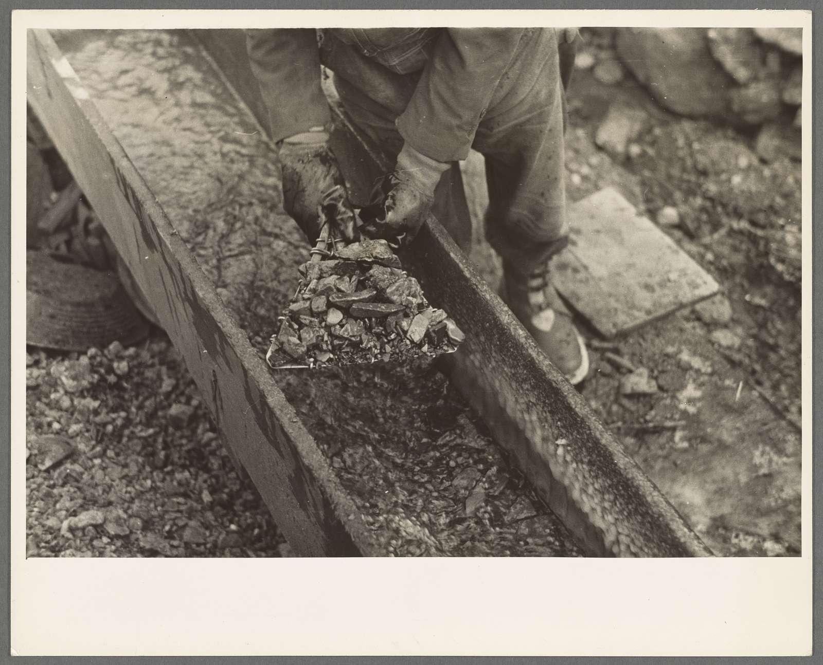 Gold miner working in sluice box, Two Bit Creek, South Dakota