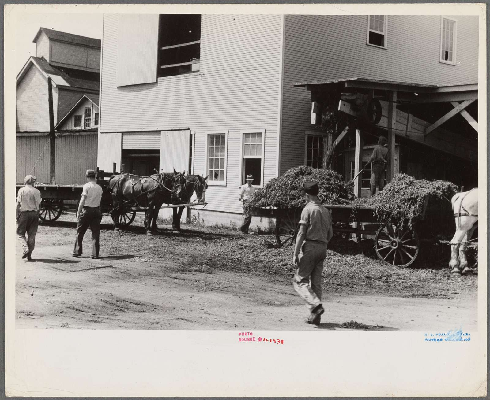 """""""At a pea vinery,"""" central Ohio. Loading waste to be taken back to his farm for feeding"""