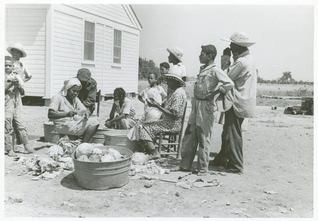 Southeast Missouri Farms. Family of Farm Security Administration client shredding cabbage. May 1938.