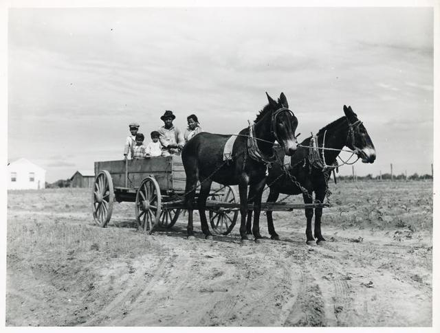 Ben Turner and family in their wagon with mule team. Flint River Farms, Georgia. May 1939.