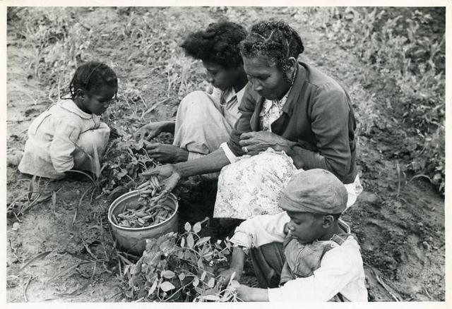 Project family picking peas in their garden, Flint River Farms, Ga. May 1939.