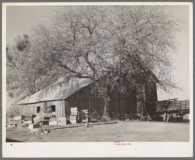 Barn of fruit farmer. Placer County, California