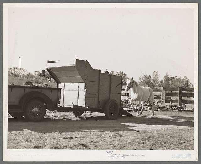 Farm scene. Placer County, California