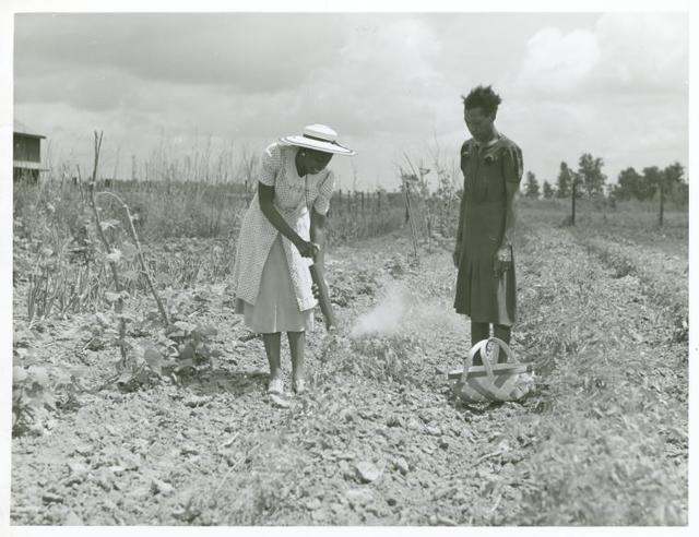 Rachel D. Moore, home management supervisor, giving demonstration in dusting plants from insects to Caldoria Smith; La Delta Project, Thomastown, La., June 1940.