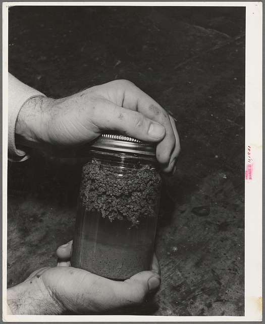 """Salinas, California. Intercontinental Rubber Producers. Laboratory exhibit. This specimen shows the """"worms"""" of rubber on top and tha bagasse settled to the bottom, which is exactly what happens in regular factory operations of rubber extraction"""