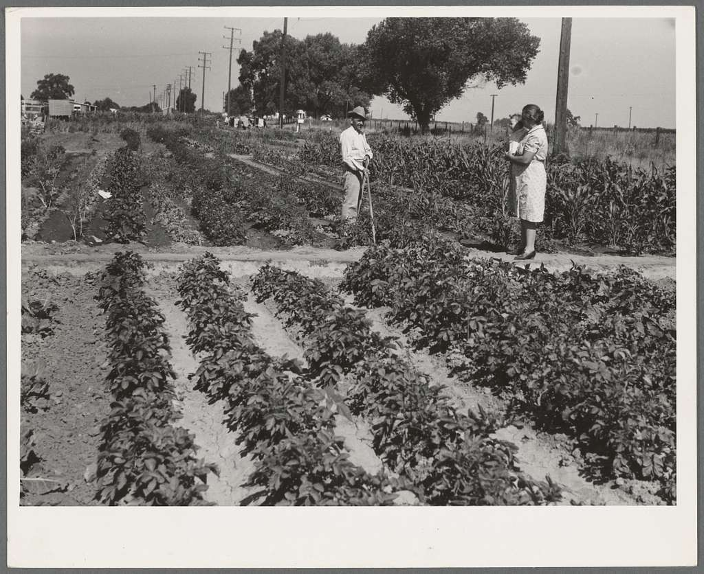 Farm workers victory festival, June 1942. Mr. and Mrs. James Ramsey have one of the best gardens at Woodville FSA Farm Workers Community. They are labor home residents. Baby McAdoo is a young neighbor for whom they care while his parents are working in the field