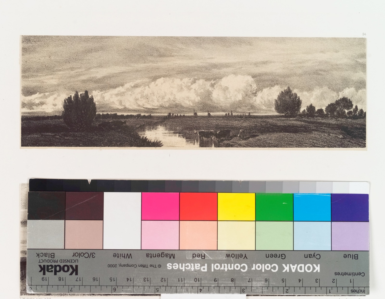 [Meadow with scattered trees, cows in stream in center.]