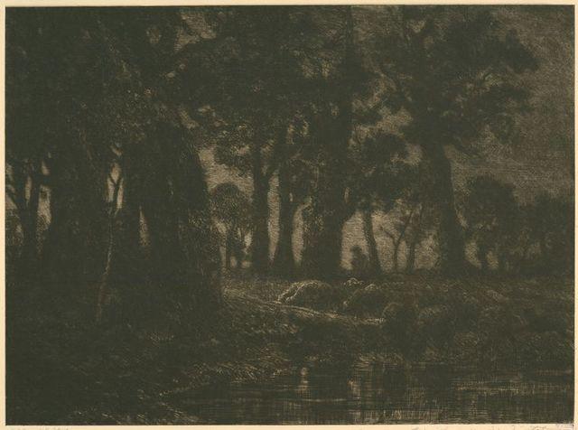 Lisière de forêt, effet de soir.