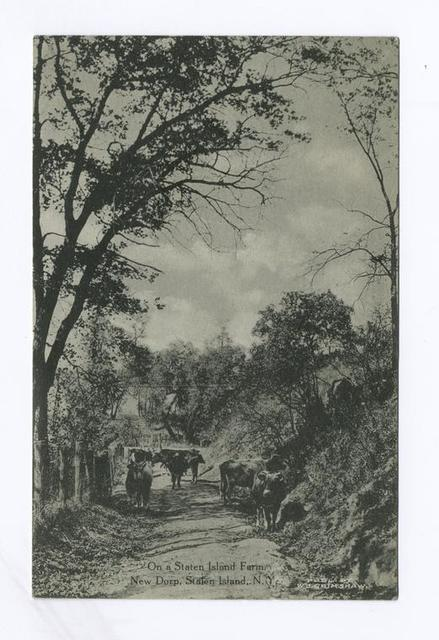 On a Staten Island Farm, New Dorp, Staten Island, N.Y. (cows standing on dirt path)