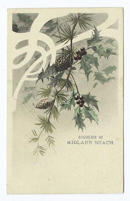 Souvenir of Midland Beach. [Branches of holly and pine with cones]