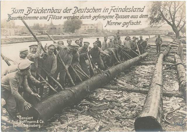 Zum Brückenbau der Deutschen in Feindesland Baumstämme und Flösse werden durch gefangene Russen aus dem Narew gefischt.