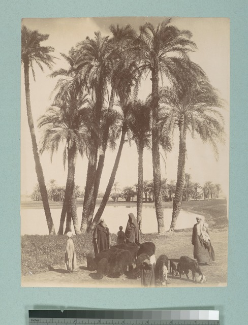 [A group of women, children and one man with sheep and goats on the water.]