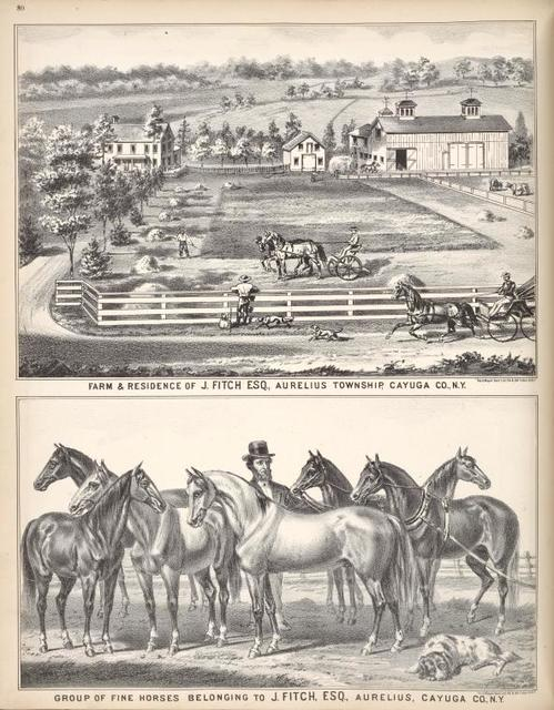 """Farm & Residence of J. Fitch ESQ., Aurelius Township, Cayuga Co., N.Y.; Group of Fine Horses Belonging to J. Fitch, ESQ., Aurelius, Cayuga Co., N.Y. """