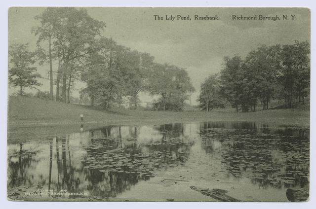 The Lily Pond, Rosebank, Richmond Borough, N.Y.