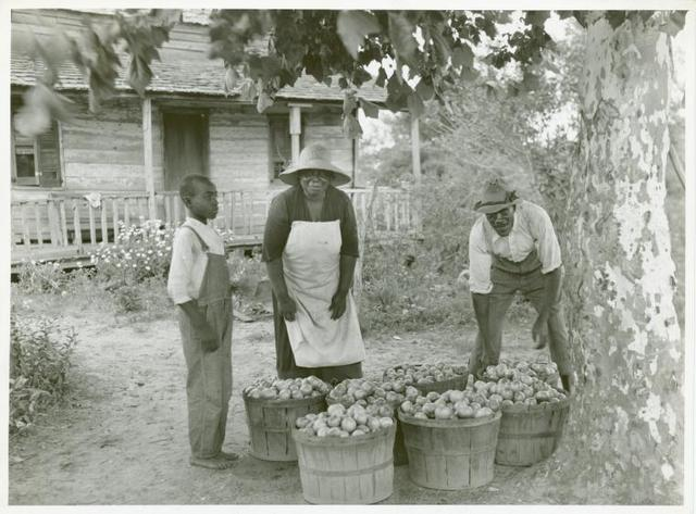 Rehabilitation client and wife with one day's tomato pick off coast of Beaufort, South Carolina.